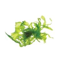 marine-algae