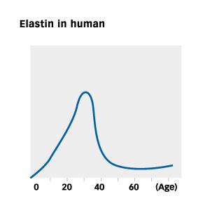 Elastin-in-human